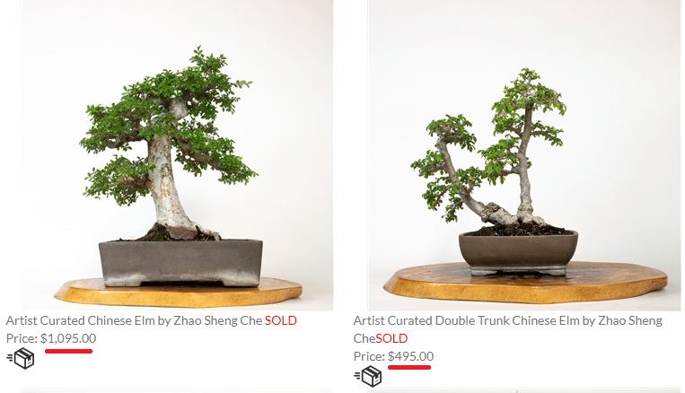 expensive bonsai trees